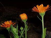 Květiny 4