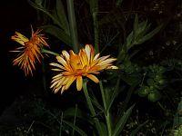Květiny 5