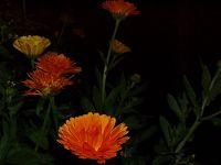 Květiny 6