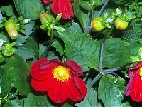 Květiny 7