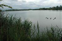 Rybník Vítek 1