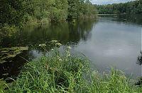 Rybník Stupský 1
