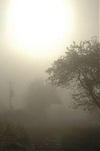 Strom v ranní mlze
