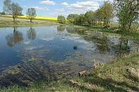 Rybník u Srubce 1