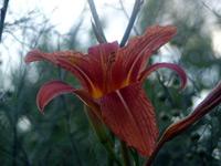 Květina 1